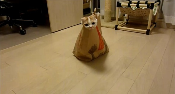 Get a serious load of cute – this furry little McDonald's fan has found the purrr-fect toy!