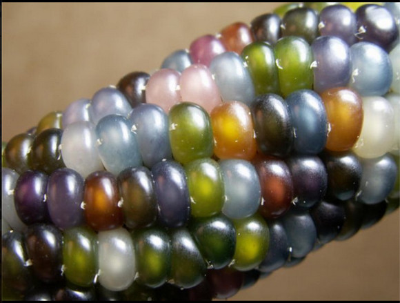 Glass Gem Corn Craze Hits Japan