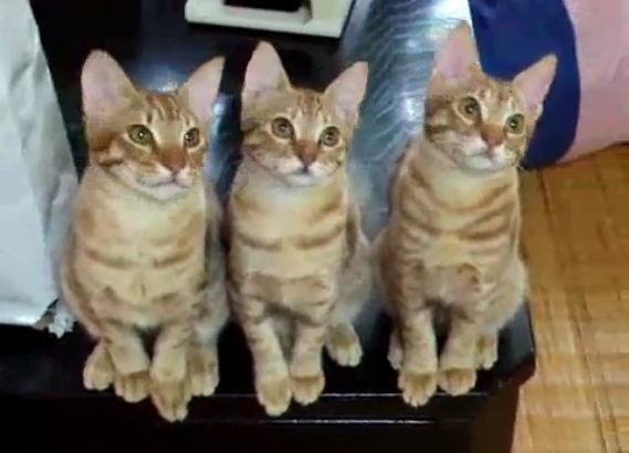 In purrr-fect synch! This adorable video is sure to put a smile on your face