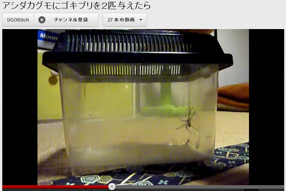 Cockroach-Killer Spider (aka Fighting Nope with More Nope)