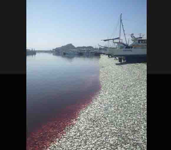 Something fishy's going on in a fishing port in Japan, literally – and tons and tons of it too!