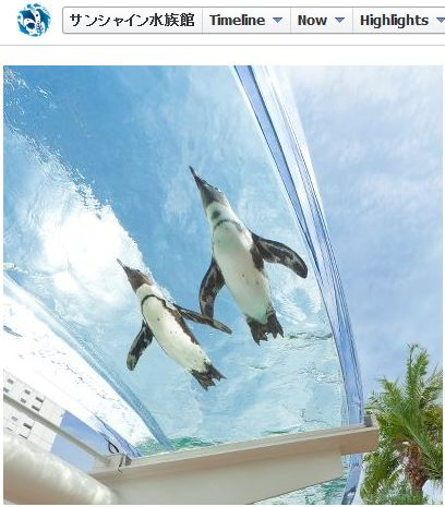 A Cool Sight for the Hot Summer! See Penguins Fly – at a Rooftop Aquarium in the Middle of Tokyo