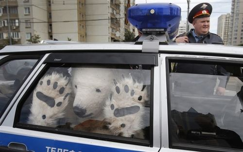 Polar Bear Arrested in Russia for Holding Unlawful Protest, Writes Catchy Slogans