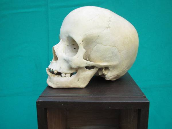 Wait… Did Someone Just Sell a Human Skull on Yahoo Auction?!