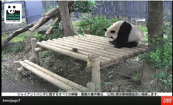 Ueno Zoo's Panda Enclosure Goes Big Brother, Installs Real-Time Cameras for All to See