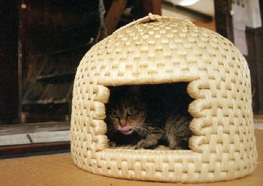 Hand-made Pussy Palaces Require a One-Year Wait
