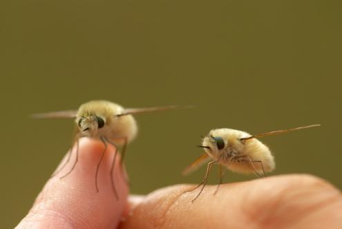 Amazing Photos of the Earth's Weirdest Creatures at the 2013 Insect Academy Awards