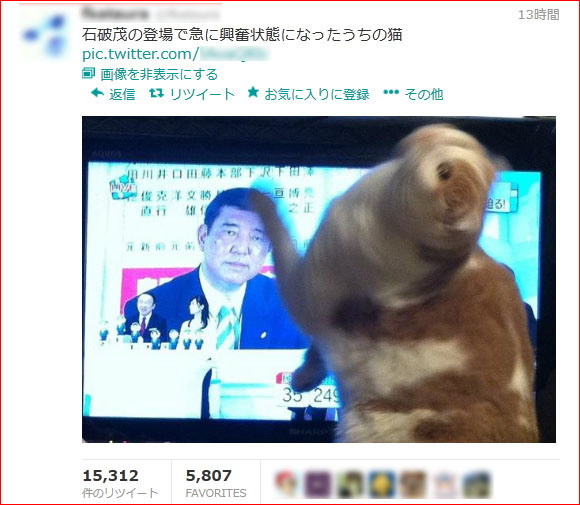 Japanese Cat Completely Wigs Out at the Sight of Secretary-General Shigeru Ishiba