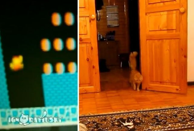 "In Russia, Pressing ""A"" Button Makes Cat Jump 【Video】"