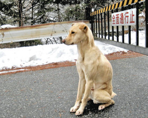 Modern-Day Hachikō: Dog Waits Over a Week for Its Owner in the Snow and Rain