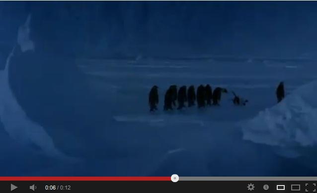 Startling Nature Footage Reveals Penguins Are Kind of Jerks