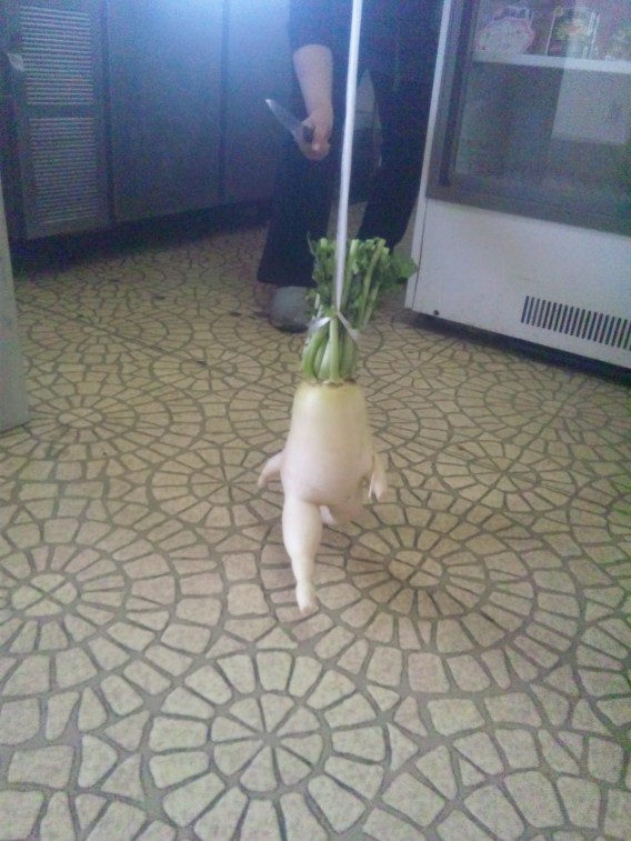 The Life and Times of a Japanese Radish