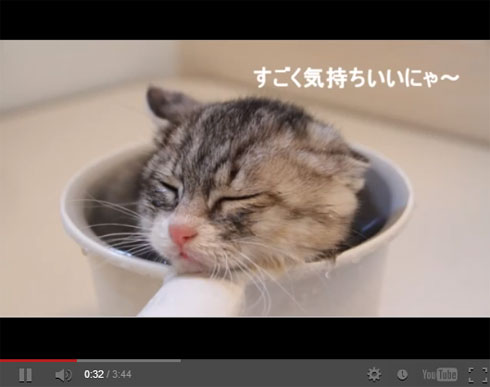 And the Oscar Goes to… Kitten Taking First Bath in Tiny Cup!