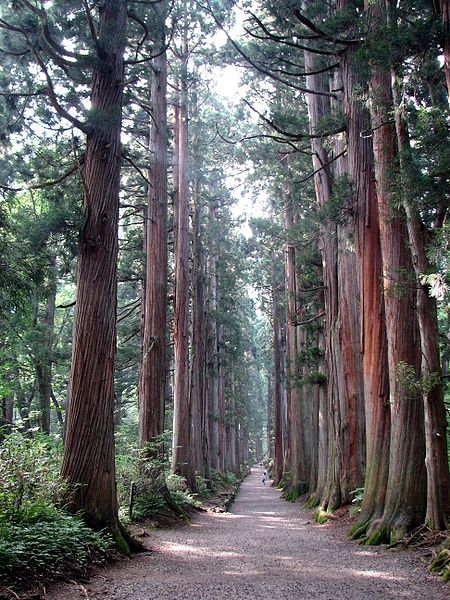 Japanese Scientists Engineer Pollenless Cedar Trees, May Be Too Late to Alleviate Japan's Growing Hay Fever Problem