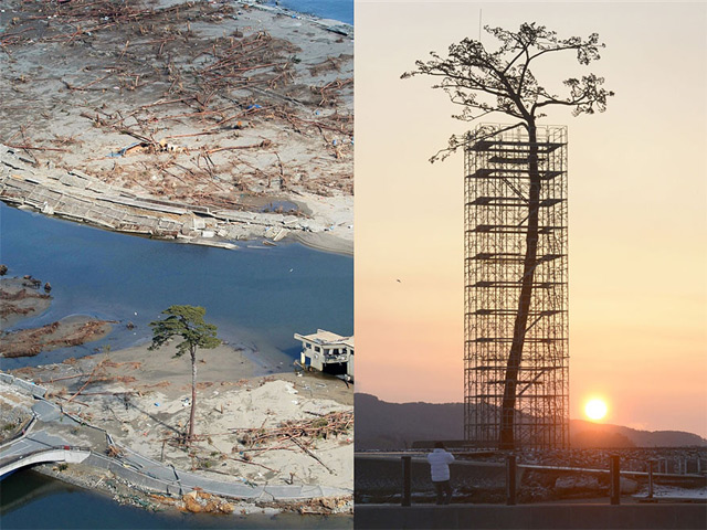 """Miracle Pine"" Monument Honors Single Remaining Tree in Forest Ravaged By 2011 Tohoku Tsunami"