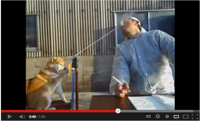 Shiba Inu Makes Sure Her Master Won't Fail the School Entrance Exam