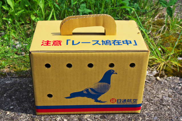 Can a Courier Carry Carrier Pigeons Cased in Cardboard?