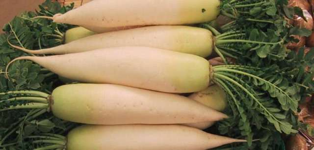 14 Year-Old Girl's Crime Spree Thwarted by Suzuka Police, Motive: To Laugh at Daikon Getting Run Over by Cars