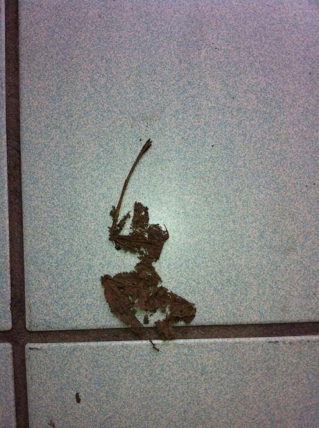 Nature's Little Warriors: Beware of the Killer Samurai Leaf!