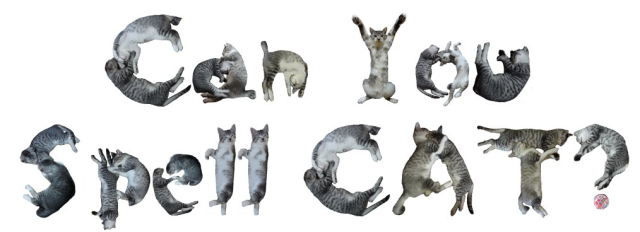 Neko Font: Let Cats Do the Talking for You!