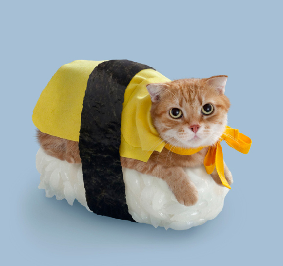 When Two Amazing Worlds Collide: Welcome to the World of Cat Sushi!
