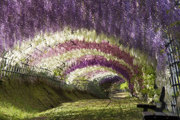 The Ten Most Beautiful Tunnels in the World and Where You Can Find Them6