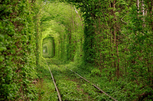The Ten Most Beautiful Tunnels in the World and Where You Can Find Them7