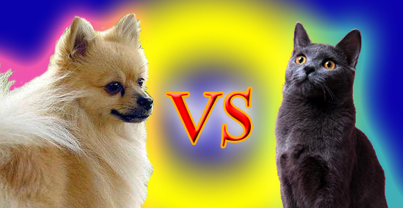 Which is More Loved in Japan: Cats or Dogs?