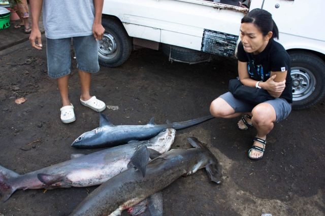 One brave young woman's fight to replace shark fishing with ecotourism – We talk to Kathy Xu