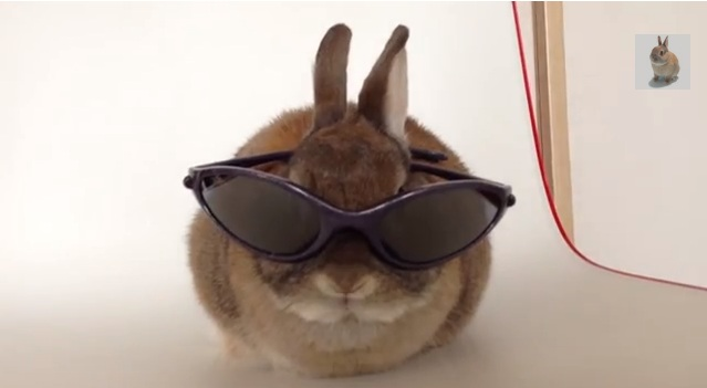 Cats are so last year — Introducing Konatsu the Bunny! 【Videos】