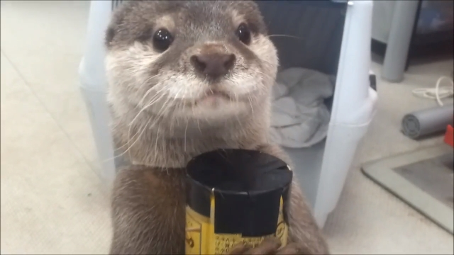 Dude, you 'otter' check this out! It's 'otterly' adorable!