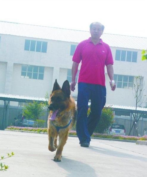 Can't keep a good dog down: One dog's 12-kilometer journey home from death