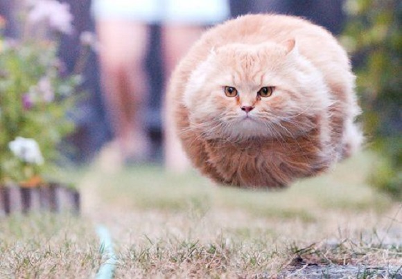 Cats gone wild: The best cat gifs as selected by Japan