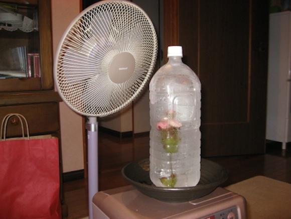 cool fan ice