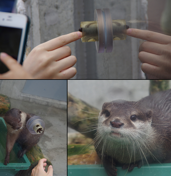 We go to shake hands with an otter, it's like that scene in E.T. but way cuter!