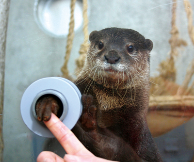 Marine park offers chance to shake hands with a loveable otter