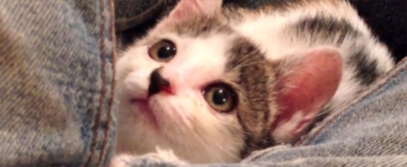 Blind kitten who regained her sight through loving care is thriving one year on