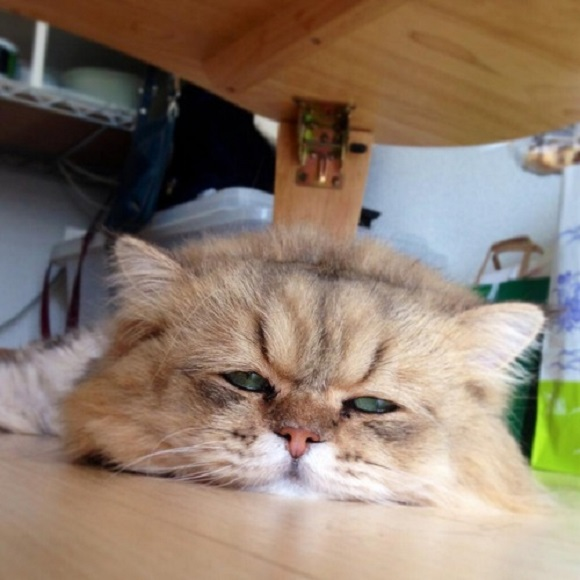 Emo kitty haz a sad, needs your hugs