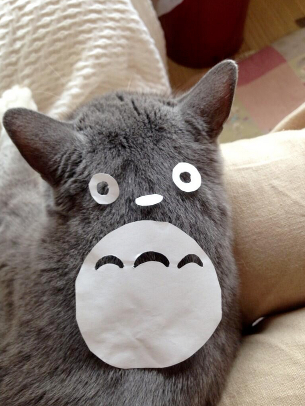 Is your pet cat too lazy and uninspiring? Turn him into Totoro!