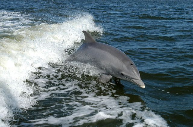 Environmentalists angered by new research that suggests dolphins have low IQs and behave violently
