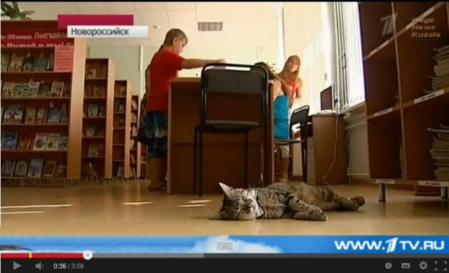 Kuzya the cat assigned to assistant librarian position in Novorossiysk, Russia