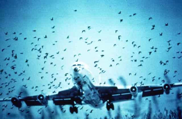Asahi Shimbun writer's birdstrike ignorance evokes wrath of Japanese netizens