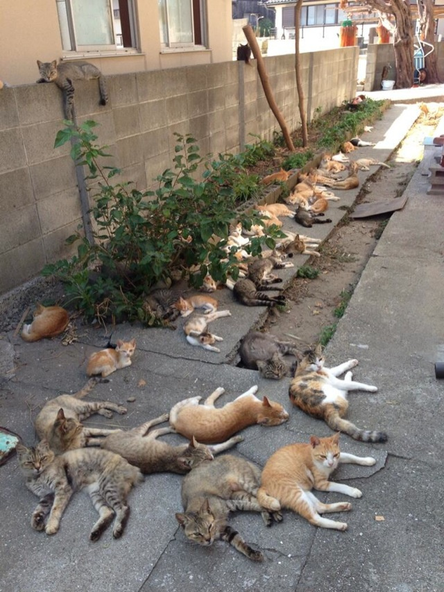 This Japanese island is filled to the brim with felines!