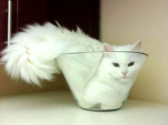 Cats in bowls, buckets and boxes: smile guaranteed!