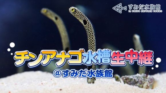 Tokyo Skytree Sumida Aquarium Spotted Garden Eel