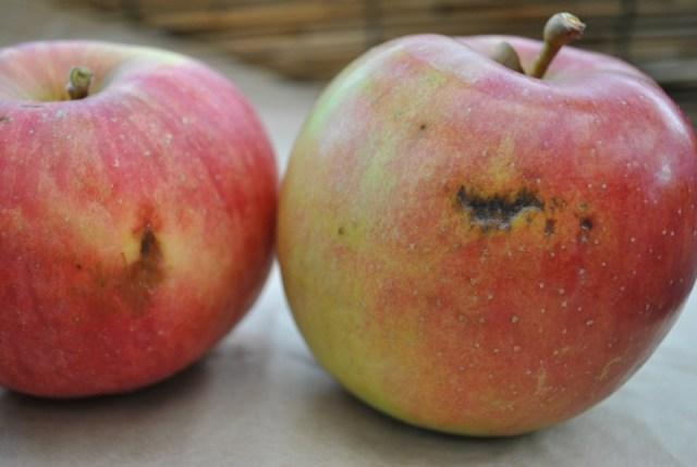 "Nagano farmers sell damaged ""typhoon apples"" online"