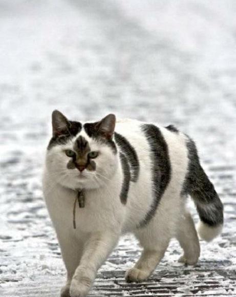 yakuza cat2