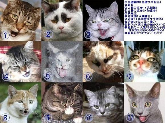 yakuza cats