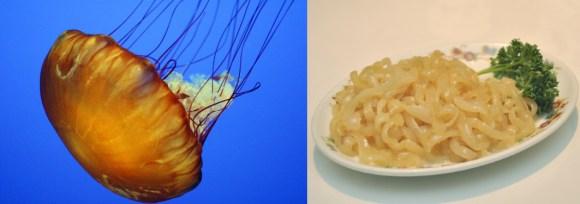 2013.11.17 jellyfish