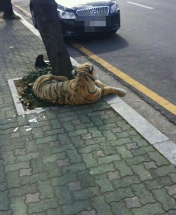 Tiger in park causes scare in Korea